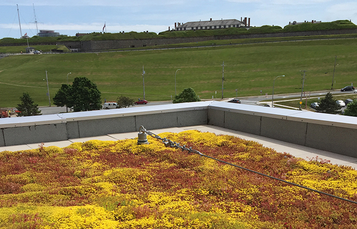 Green roofs vs conventional roofs