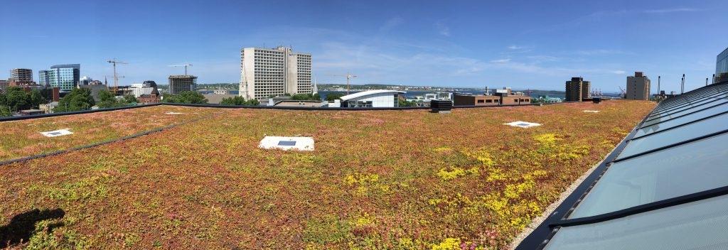 Halifax Library Green Roof