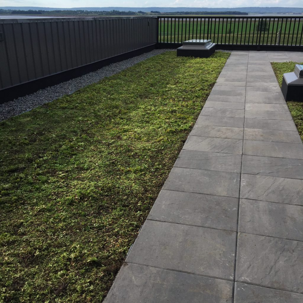 Green Roof - Wolfville