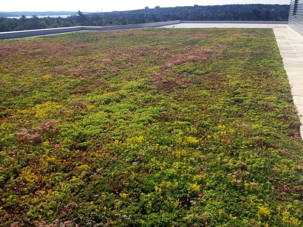 CPA High School Green Roof