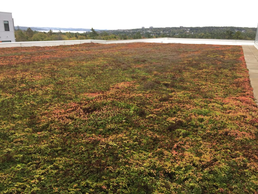 CPA High School, Green Roof